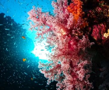 Die Schönheit der Korallen